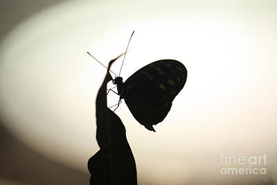 Abstract Wildlife Photograph - Butterfly Silhouette  by Nishanth Gopinathan
