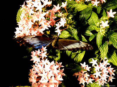 Ebsq Digital Wall Art - Photograph - Butterfly Still Life by Kimmary MacLean