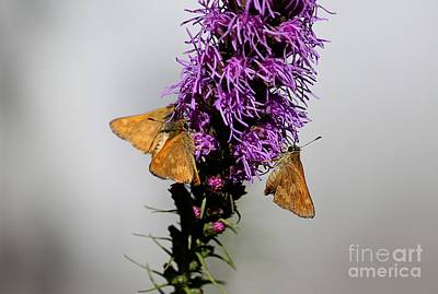 Photograph - Butterfly Trio by Erica Hanel
