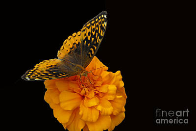 Butterfly Visitor Art Print by Cindy Manero