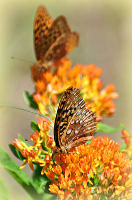 Butterfly Weed 2 Print by Marty Koch