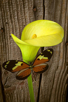 Butterfly With Calla Lily Art Print by Garry Gay