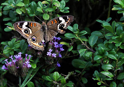 Butterfly With Torn Wings Art Print by Robert Ullmann