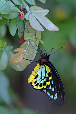 Photograph - Butterfly World by Juergen Roth