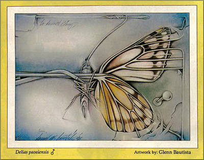 Drawing - Butterflycomp 1991 B by Glenn Bautista