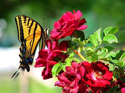 Butterflyrose Art Print
