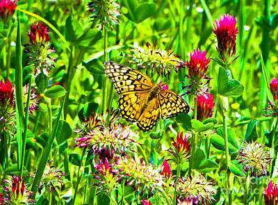 Found Round And About Photograph - Butterly And Crimson Clover by Tisha  Clinkenbeard