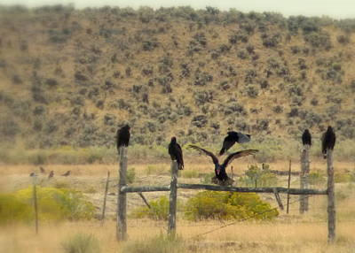 Photograph - Buzzards by Cindy Wright