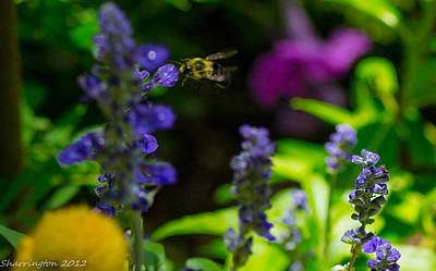 Photograph - Buzzing Around by Shannon Harrington