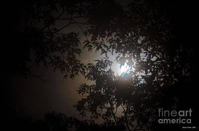 Photograph - By The Light Of The Silvery Moon by Maria Urso