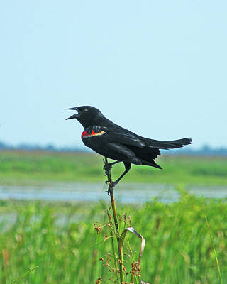 Photograph - Bye Bye Blackbird by Lizi Beard-Ward