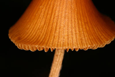 Toadstool Photograph - C Ribet Fungiart Brown Cap by C Ribet