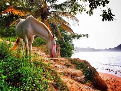Photograph - Caballo Blanco by Skip Hunt