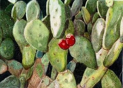Cacti Original