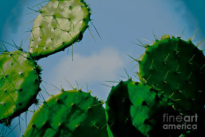 Photograph - Cacti Junkie by Kim Henderson