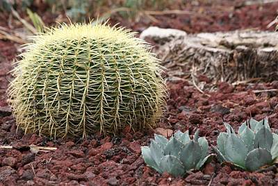 Photograph - Cacti by Scott Brown