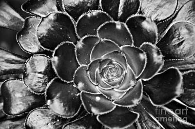 Photograph - Cactus 10 Bw by Cassie Marie Photography