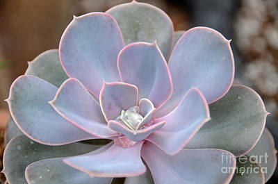 Photograph - Cactus 12 by Cassie Marie Photography