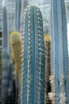 Photograph - Cactus 14 by Cassie Marie Photography
