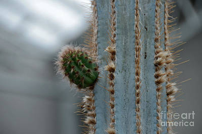 Photograph - Cactus 17 by Cassie Marie Photography