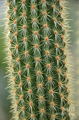 Photograph - Cactus 19 by Cassie Marie Photography