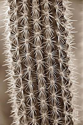 Photograph - Cactus 19 Sepia by Cassie Marie Photography