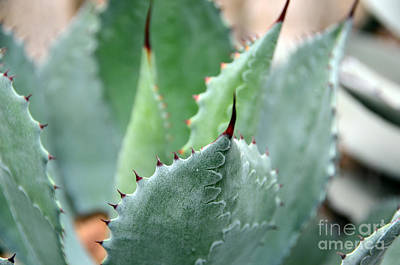 Photograph - Cactus 3 by Cassie Marie Photography