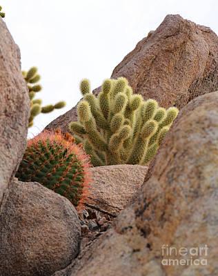 Cactus Among The Rocks Art Print by Donna Greene