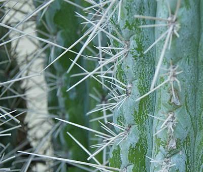 Cactus Close Art Print by Dietrich Sauer