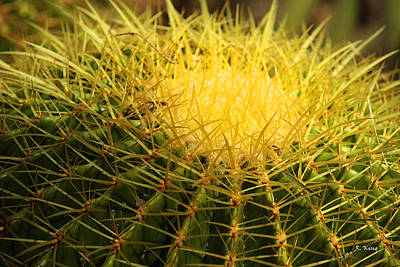 Photograph - Cactus Crown by Roena King