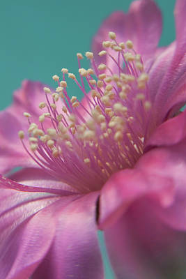 Cactus Flower Art Print by Images by Patti-Jo