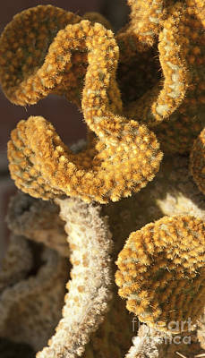 Photograph - Cactus In Orange Polka Dots by Artist and Photographer Laura Wrede