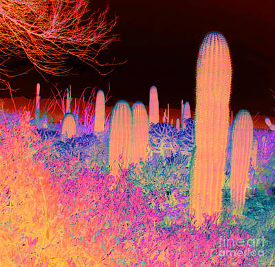 Photograph - Cactus by Julie Lueders