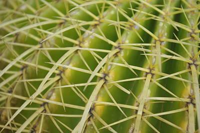 Alicante Photograph - Cactus by Oscar Martín