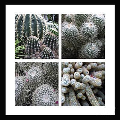 Photograph - Cactus Quartet by Ann Powell
