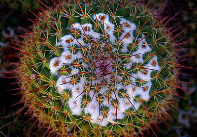 Cactus Radiance Art Print