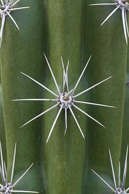 Photograph - Cactus Spines, Saguaro National Park by Ingo Arndt