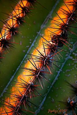Arizona Artist Jeff Curtis Photograph - Cactus Sunset by Jephyr Art