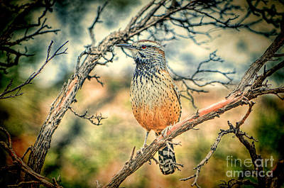 Cactus Wren Art Print by Donna Greene