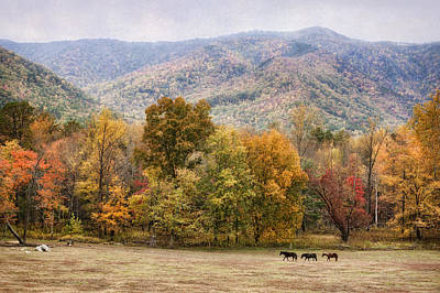 Photograph - Cades Cove Horses In Fall by Cheryl Davis