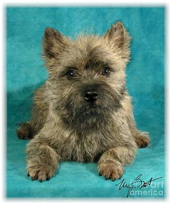 Pup Digital Art - Cairn Terrier Pup by Maxine Bochnia
