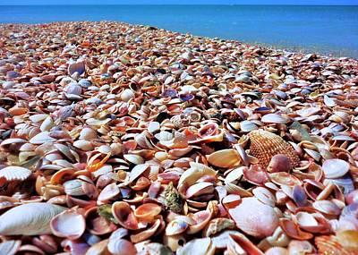 Photograph - Caladesi Shells I by Benjamin Yeager