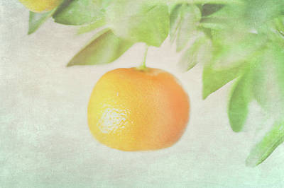 Orange Photograph - Calamondin Miniature Orange by Peter Chadwick LRPS