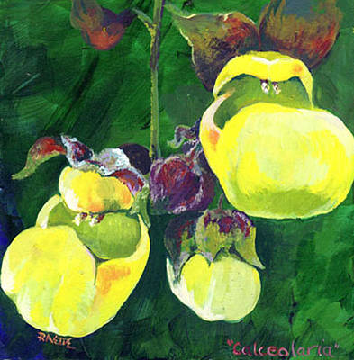 Calceolaria Art Print by Raette Meredith