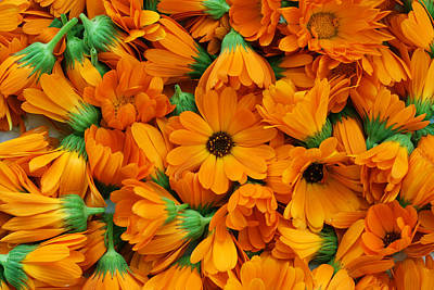 Art Print featuring the photograph Calendula Flowers by Aleksandr Volkov