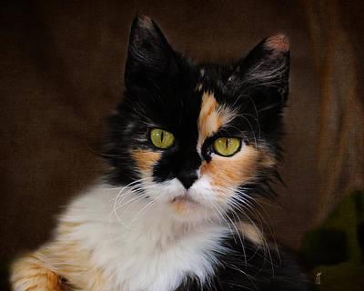 Calico Cat Photograph - Calico Cat Portrait by Jai Johnson