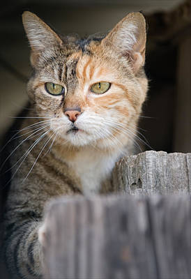 Photograph - Calico Kitty by Gary Rose