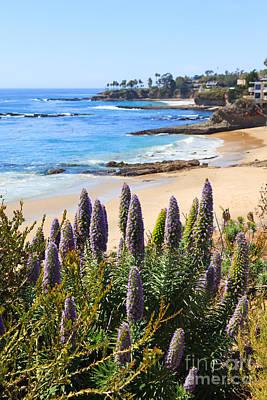 Madeira Photograph - California Coast Flowers Photo by Paul Velgos