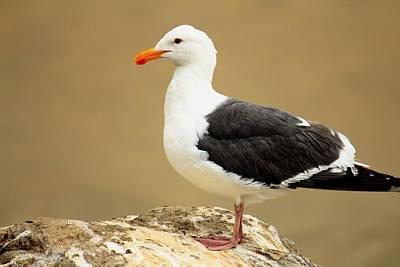 Photograph - California Coast Seagull by Kathy Nairn