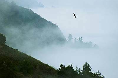 Photograph - California Condor Soars Over Big Sur by Eric Tressler